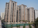 3 BHK Flat  For Sale  In Amrapali Zodiac In Sector-120