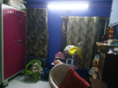 2 BHK Flat  For Sale  In Parimala Chandra Nivas In L. B. Nagar